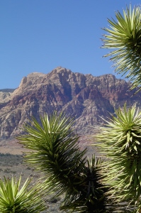 Red Rock Canyon 1 300.JPG